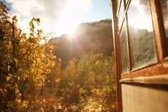 Φύλλα σταφυλιών φθινοπώρου στον ήλιο Θολωμένο πτώση υπόβαθρο στοκ φωτογραφίες