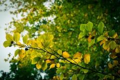 Φύλλα στα δέντρα κατά τη διάρκεια του πρώιμου φθινοπώρου στοκ εικόνα με δικαίωμα ελεύθερης χρήσης