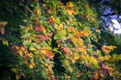 Φύλλα στα δέντρα κατά τη διάρκεια του πρώιμου φθινοπώρου στοκ φωτογραφία