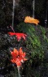 Φύλλα στον καταρράκτη Στοκ φωτογραφία με δικαίωμα ελεύθερης χρήσης
