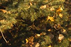 Φύλλα στους κομψούς κλάδους στοκ εικόνες