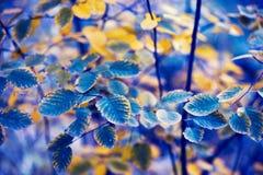 Φύλλα στο θάμνο στο πάρκο Μπλε κίτρινο φίλτρο στοκ φωτογραφίες με δικαίωμα ελεύθερης χρήσης