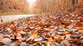 Φύλλα στο autnum στοκ εικόνα
