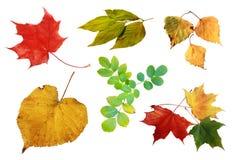 φύλλα συλλογής φθινοπώρ& στοκ φωτογραφία