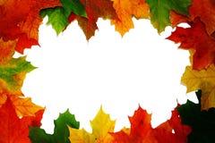 φύλλα συνόρων φθινοπώρου Στοκ Εικόνα