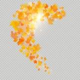 Φύλλα σφενδάμου πτώσης με το λεπτό ήλιο για τη διακόσμηση Το φθινόπωρο αφήνει το πρότυπο συνόρων διάνυσμα εικόνας απεικόνισης στο ελεύθερη απεικόνιση δικαιώματος