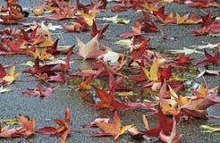 Φύλλα σφενδάμου στα χρώματα φθινοπώρου αφορημένος μια οδό στοκ εικόνα