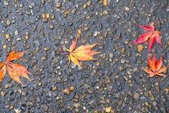Φύλλα σφενδάμου στον υγρό δρόμο Στοκ Φωτογραφία