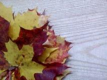 Φύλλα σφενδάμου στο ξύλινο υπόβαθρο Στοκ φωτογραφίες με δικαίωμα ελεύθερης χρήσης