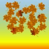 Φύλλα σφενδάμου στο τέλος του φθινοπώρου Στο υπόβαθρο του ουρανού Στοκ Εικόνα