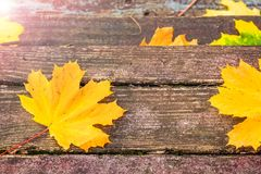 Φύλλα σφενδάμου φθινοπώρου στους παλαιούς ξύλινους πίνακες Στοκ φωτογραφίες με δικαίωμα ελεύθερης χρήσης