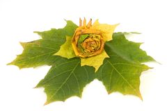 φύλλα σύνθεσης φθινοπώρο& στοκ εικόνα με δικαίωμα ελεύθερης χρήσης