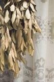 Φύλλα της δάφνης Στοκ Εικόνες