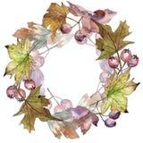Φύλλα του στεφανιού κραταίγου σε ένα ύφος watercolor Στοκ εικόνα με δικαίωμα ελεύθερης χρήσης