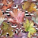 Φύλλα του σχεδίου κραταίγου σε ένα ύφος watercolor Στοκ Εικόνες