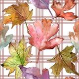 Φύλλα του σχεδίου κραταίγου σε ένα ύφος watercolor Στοκ φωτογραφίες με δικαίωμα ελεύθερης χρήσης