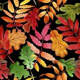 Φύλλα του σχεδίου viburnum σε ένα ύφος watercolor Στοκ Φωτογραφία