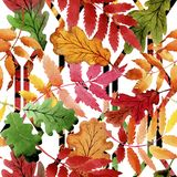 Φύλλα του σχεδίου viburnum σε ένα ύφος watercolor Στοκ Εικόνες