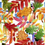 Φύλλα του σχεδίου viburnum σε ένα ύφος watercolor Στοκ φωτογραφία με δικαίωμα ελεύθερης χρήσης