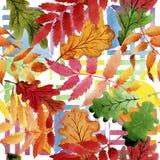Φύλλα του σχεδίου viburnum σε ένα ύφος watercolor Στοκ Φωτογραφίες