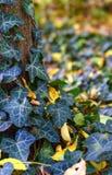 Φύλλα του φθινοπώρου - Macea, Arad, Ρουμανία Στοκ εικόνες με δικαίωμα ελεύθερης χρήσης