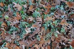 Φύλλα το χειμώνα στοκ φωτογραφίες με δικαίωμα ελεύθερης χρήσης