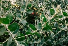 Φύλλα των φυτών Στοκ Εικόνες