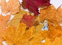 φύλλα φακέλων Στοκ Εικόνες