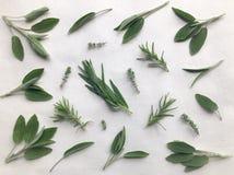 Φύλλα φασκομηλιάς, της Rosemary, θυμαριού και τραχουριού που απομονώνονται στο λευκό στοκ εικόνα με δικαίωμα ελεύθερης χρήσης