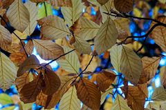 Φύλλα φθινοπώρου για το υπόβαθρο Στοκ Εικόνες