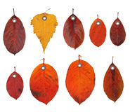 Φύλλα φθινοπώρου ετικετών ετικεττών Στοκ εικόνες με δικαίωμα ελεύθερης χρήσης