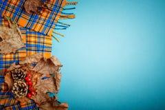 Φύλλα φθινοπώρου και κώνοι πεύκων σε ένα μπλε υπόβαθρο διάστημα αντιγράφων ανασκό&p Στοκ Φωτογραφία
