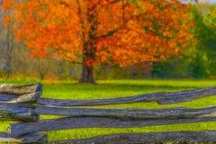Φύλλα φθινοπώρου και παλαιός ξύλινος φράκτης στοκ εικόνα