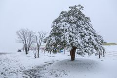 Φύλλα φθινοπώρου και χιονισμένο δέντρο στοκ εικόνες