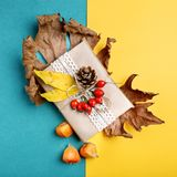 Φύλλα φθινοπώρου, μούρα, ισχία και κώνοι πεύκων σε ένα πολύχρωμο υπόβαθρο Ένα υπόβαθρο φθινοπώρου Στοκ Φωτογραφία