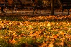 Φύλλα φθινοπώρου, πάγκοι πάρκων, πράσινες χλόη και ακτίνες ήλιων Στοκ φωτογραφία με δικαίωμα ελεύθερης χρήσης
