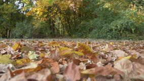 Φύλλα φθινοπώρου που εμπίπτουν σε σε αργή κίνηση στο δασικό πάτωμα απόθεμα βίντεο