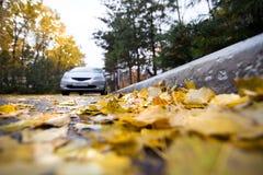 Φύλλα φθινοπώρου σε έναν δρόμο Στοκ Εικόνες