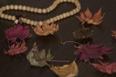 Φύλλα φθινοπώρου σε έναν ξύλινο πίνακα στοκ εικόνα με δικαίωμα ελεύθερης χρήσης