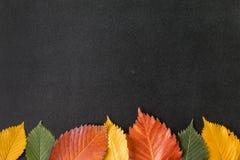 Φύλλα φθινοπώρου σε έναν πίνακα κιμωλίας Στοκ Φωτογραφία