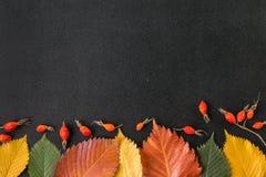 Φύλλα φθινοπώρου σε έναν πίνακα κιμωλίας Στοκ Εικόνες