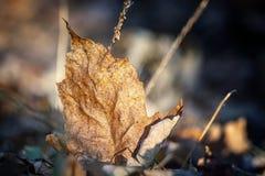 Φύλλα φθινοπώρου σε ένα δάσος στοκ εικόνα
