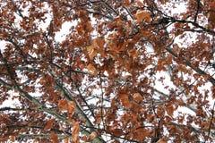 Φύλλα φθινοπώρου σε ένα δέντρο ενάντια στον ουρανό στοκ εικόνες με δικαίωμα ελεύθερης χρήσης