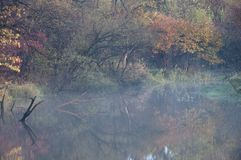 Φύλλα φθινοπώρου σε μια δασικές λίμνη/μια αντανάκλαση/μια φύση της μακριά ανατολικά Ρωσίας Στοκ Εικόνα