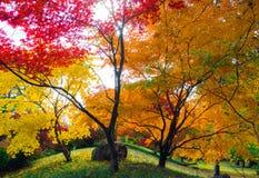 Φύλλα φθινοπώρου στα έντονα χρώματα στοκ εικόνα