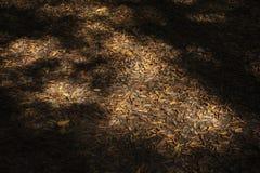 Φύλλα φθινοπώρου στις σκοτεινές σκιές Στοκ Φωτογραφία