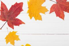 Φύλλα φθινοπώρου στο άσπρο ξύλινο υπόβαθρο Στοκ Φωτογραφία
