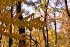 Φύλλα φθινοπώρου στο δάσος Στοκ Εικόνα