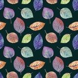 Φύλλα φθινοπώρου του διαφορετικού συρμένου χρώματα watercolor απεικόνιση αποθεμάτων