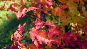 Φύλλα φθινοπώρου υπαίθρια σε ένα αστικό περιβάλλον απόθεμα βίντεο
